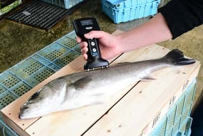 Yamato Scale Fish Analyzer Fish Market 4