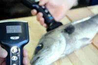 Yamato Scale Fish Analyzer Fish Market